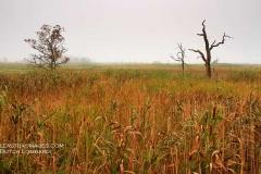 Jacob's-Point-Marsh