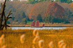 fall-IMG_0178_edited-1